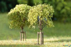 Junge Bäume 10 Stück