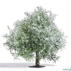 Apfelbaum blühend ca. 75 mm hoch