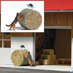 Action-Set: Hund jagt Katze