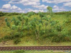 Waldrandbäume /-sträucher 75-90 mm hoch