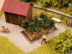 Tomatenstauden 3 x 6 cm 6 Pflanzen