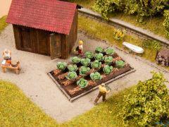 Weisskohl 3 x 6 cm 16 Pflanzen