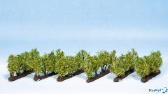 Weinreben 24 Rebstöcke ca. 22 mm hoch