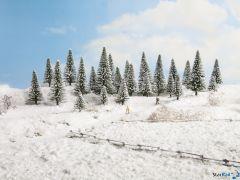 Schneetannen
