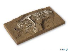 Dinosaurier T-Rex Ausgrabung