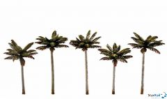 5 Palmen 12-13.3 cm hoch