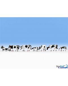 Kühe, schwarz-weiss